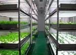 如何让LED灯在植物工厂重获利润点?