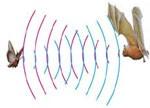 语音识别新方向:动态定向超声波接受技术
