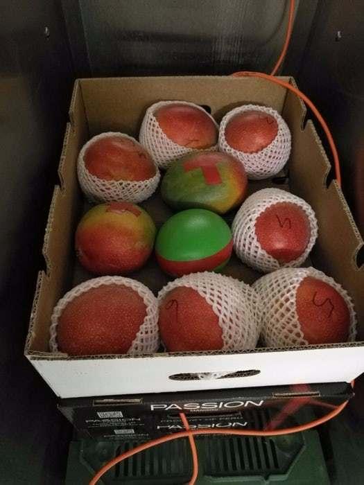 厉害了!水果造型的传感器将能检测水果的储藏温度