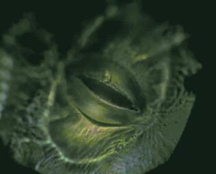 新鲜!传感器可以监测植物缺水状况!