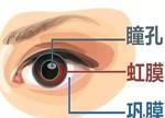 指纹识别和虹膜识别如何应对安全性需求?