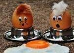 """""""毒鸡蛋""""食品污染事件发酵 欧洲食品安全警钟敲响"""