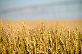 俄勒冈州尤马蒂拉市希望回收数据中心用水灌溉农田