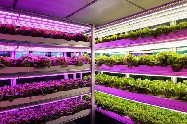 欧司朗入股加拿大Motorleaf 进一步发力植物照明