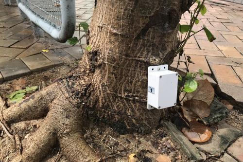 树木稳定性如何监测?香港将安装8000个传感器
