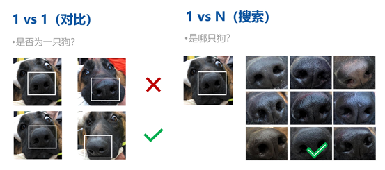 又见黑科技,关于宠物识别你知道多少?