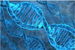瑞士伯爾尼大學科研人員:一周內可以人工合成新型冠狀病毒